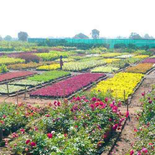 Flower Plant Nursery In India - Flowers Healthy