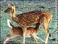 Pench Tours