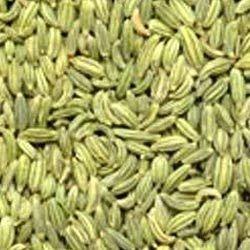 Fennel Seed in Jaipur, सौंफ का बीज, जयपुर - Latest