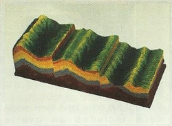 Model Of The Makup Of Drape And Evolution model