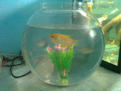 Glass Fish Bowl In Chennai Latest Price Mandi Rates From Dealers