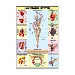 HP15S-Lymphatic System Charts