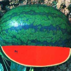Karina King F-1 Hybrid Watermelon Seed