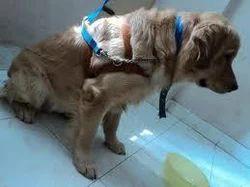 Pet Boarding Facility