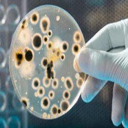Paper Slimicides, Chemical Paper, कागज के रसायन in Gota ...
