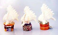 SeaShell Lamps