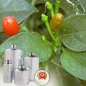 Oleoresin Paprika 120000 Cu Oil