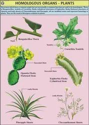 Homologous Organs For Genetics & Evolution Chart