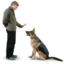 dog trainer dog training services vikas fish aquarium dog