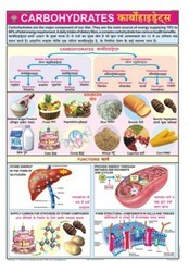 Carbohydrates For Food & Nutrition Chart