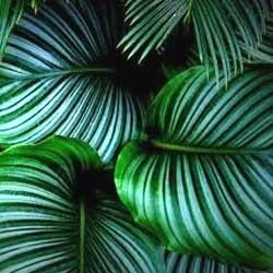 Exotic Plants Retailer
