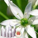 Garlic CO2 Ext