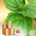 Menthol Flakes &  Powder Dry