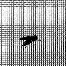 Stainless Steel Insect Wire Screens
