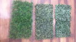 Boxwood Grass