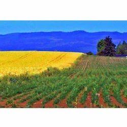 Farmlands Agent Services