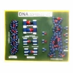 Dna Model डएनए मडल Aga Group International Exporter