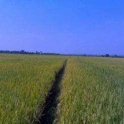 Agricultural Lands Services
