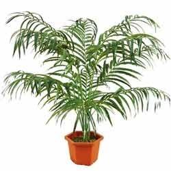 artificial indoor outdoor palm plants