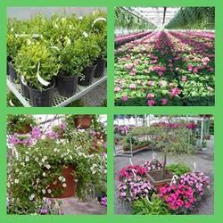 Plant Nursery Services