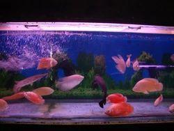 Fish Aquarium In Kollam Latest Price Mandi Rates From Dealers In