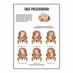 INC10 - Face Presentation Charts