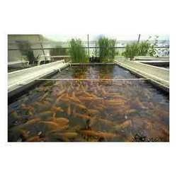 LDPE Plastic Sheets For Fish Breeding Films
