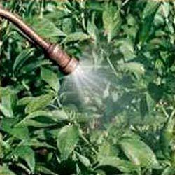 Biol Foliar Spray Powder ( Sea Weed Extract Formulation)