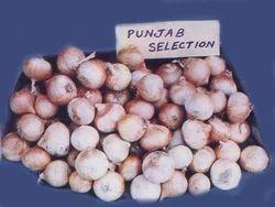 Punjab Selection