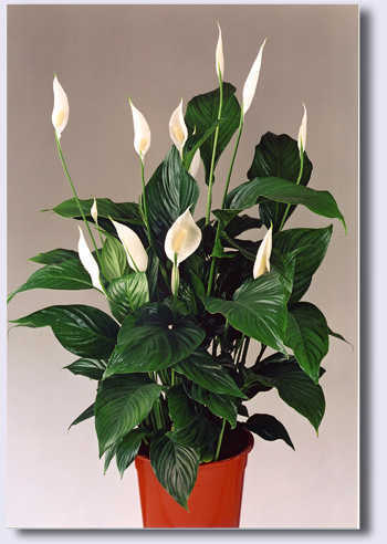 indoor plants retailer from new delhi