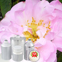 Rose (Damask) Oil