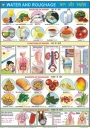 Water & Roughage For Food & Nutrition Chart