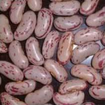 Light Speckled Kidney Beans | Vijaya Talkies, Vijayawada | Singtrade