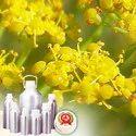 Fennel, Sweet Oil