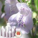 Rosemary Oils