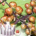 Spikenard Oils