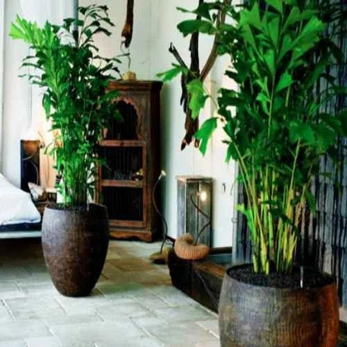 Indoor Plants Services Pictures
