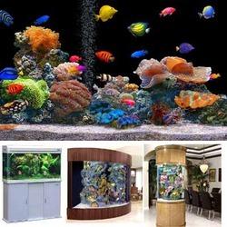 Biggest Aquarium Fish Market In Delhi Best Accent Chairs And