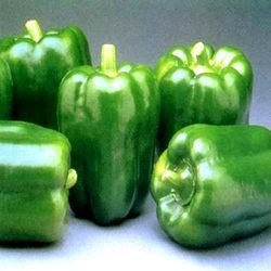 Green Capsicum A Grade Fresh Capsicums, Features: Good Quality
