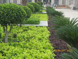 Seasonal Landscaping Color Design Services