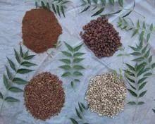 Nature Neem (Organic)