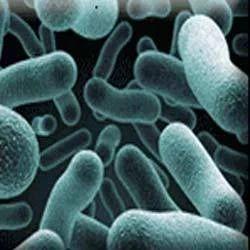 Probiotic Cultures, Biofloc Probiotic, एक्वा प्रोबायोटिक्स in Madhura  Nagar, Hyderabad , Unique Biotech Limited   ID: 1940269088