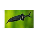 Elephentnose Fishes
