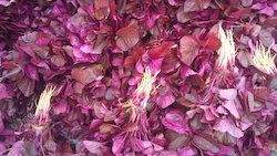 Red Spinach ( Lal Sag )