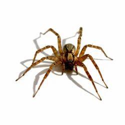 Spider Management Service