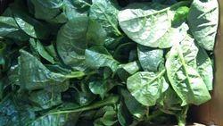 Malaber Spinach