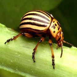 Garden Pest Management Service