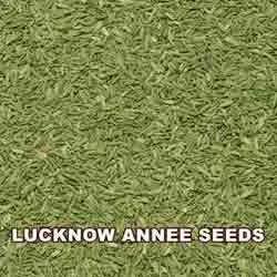 Anne Seeds