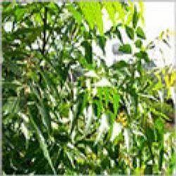 Neem Leaves, नीम के पत्ते, Neem Products | Villupuram