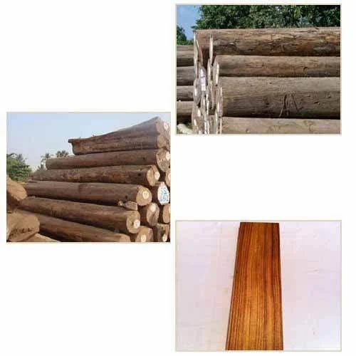 Teak Wood Burma Teak Wood Manufacturer From Hyderabad